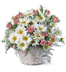 White Daisy Basket from The Colony House, your florist in Shreveport, LA