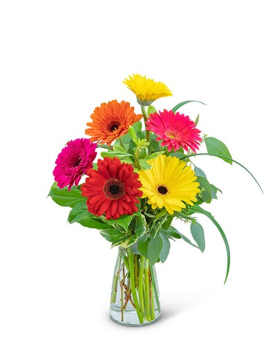 Sunny Gerbera from The Colony House, your florist in Shreveport, LA