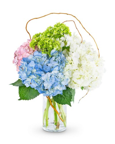Sweet Hydrangea from The Colony House, your florist in Shreveport, LA
