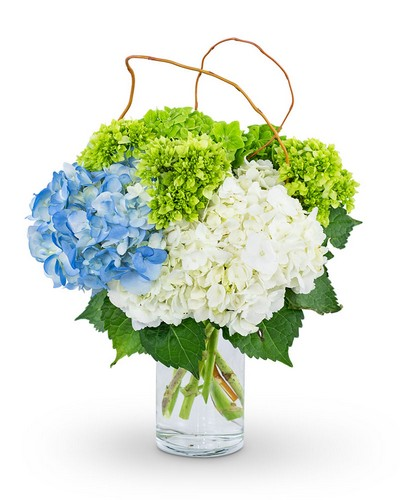 Hydrangea Perfection from The Colony House, your florist in Shreveport, LA
