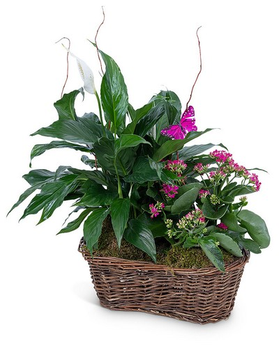 Harmony Basket with Butterflies from The Colony House, your florist in Shreveport, LA
