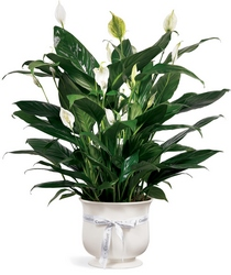 Comfort Planter from The Colony House, your florist in Shreveport, LA