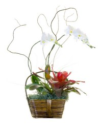 Exotic Gardens from The Colony House, your florist in Shreveport, LA