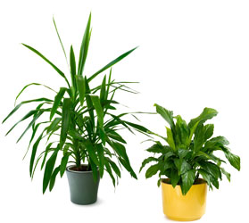 Green Plant from The Colony House, your florist in Shreveport, LA