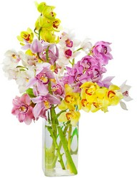 Simply Orchids from The Colony House, your florist in Shreveport, LA