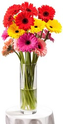 Simply Gerberas from The Colony House, your florist in Shreveport, LA